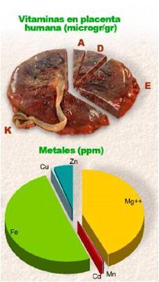 _wsb_228x404_Diagrama+placenta.+Juan+Verona